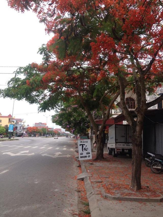 Ngắm vẻ đẹp nao lòng của đường hoa phượng dài nhất Việt Nam - 7