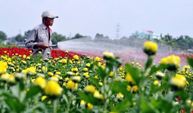 Ảnh: Cánh đồng hoa đẹp như tranh vẽ giữa Sài Gòn - 8