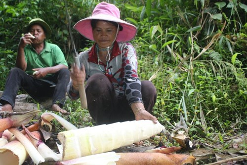 Măng của loại tre này rất ngọt và giòn. Vào mùa mưa bão, măng trở thành món ăn quý giá của dân làng Long Riêu 3.