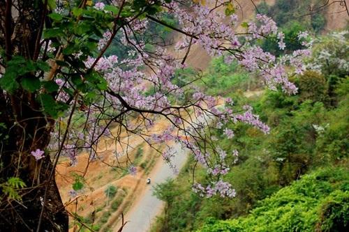 Hoa ban nở trắng rừng Tây Bắc - 8