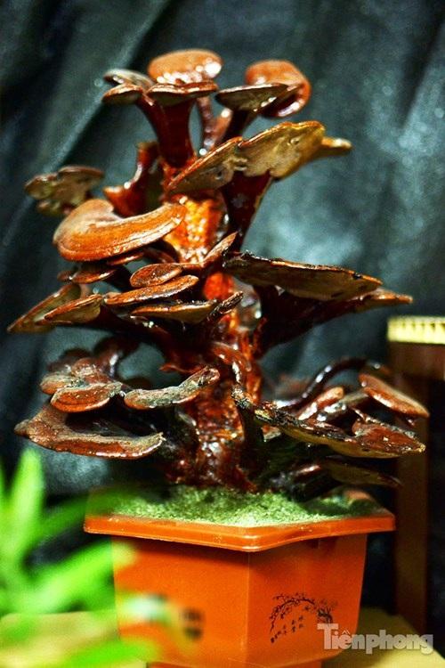Một cây nấm linh chi bonsai với nhiều tầng, tán rộng.