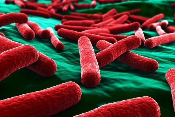 Các nhà nghiên cứu đã phát triển một loại vật liệu mới có khả năng tiêu diệt tế bào E. coli