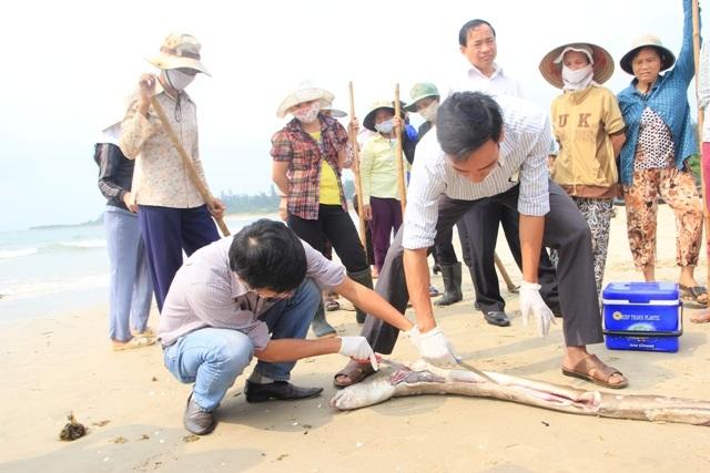 Các nhà khoa học đang nỗ lực phân tích để sớm có kết quả về nguyên nhân gây ra cá chết ở biển Miền Trung