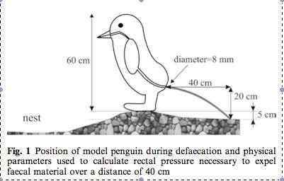 Nghiên cứu về áp suất mà chim cánh cụt tạo ra khi đi đại tiện sở hữu giải Ig nobel về lĩnh vực động lực học chất lỏng (Ảnh: scienceblogs.com)