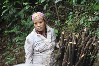 Người dân rất sợ voi rừng khi vào rừng lấy củi