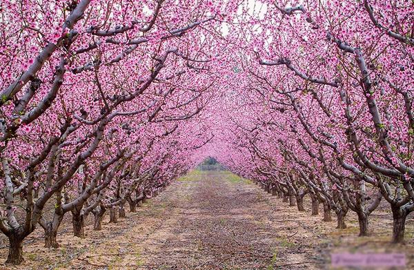 """""""A flower is a cherry blossom, a person is a Samurai (Nếu là hoa, xin làm hoa anh đào. Nếu là người, xin làm một võ sĩ đạo)."""