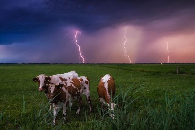 Những bức ảnh đẹp mê hồn ở vùng đất thần tiên Hà Lan - 5
