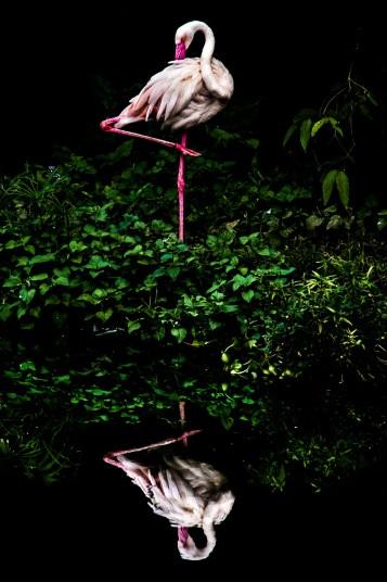 """Những hình ảnh đẹp """"chưa từng thấy"""" từ cuộc thi ảnh Quốc tế - 2"""