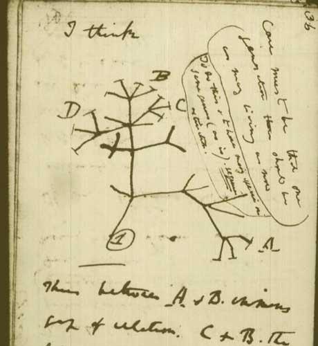 """Bản phác thảo của Darwin về """"cây sự sống"""" - Ảnh: theo Discovery"""