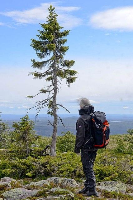 """Top 10 cây cổ thụ """"lão làng"""" nhất thế giới - 8"""