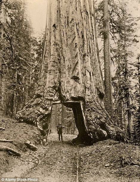 Một người đàn ông đứng dưới đường hầm vào năm 1890.
