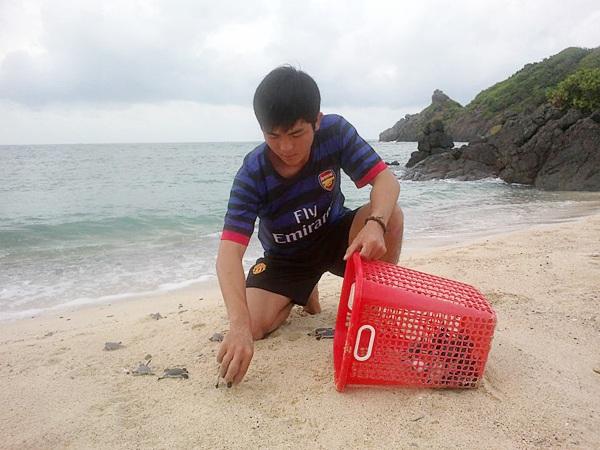 Ao Hoàng Sáng thả rùa con về biển