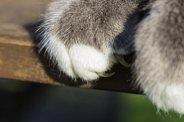Tốt nhất là nên giữ mèo trong nhà và diệt bọ chét ký sinh trên mèo để giảm nguy cơ mắc bệnh mèo cào