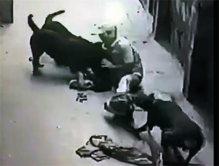 Hình ảnh người đàn ông bị chính những con chó mình nuôi dưỡng cắn xé (Ảnh cắt từ clip)