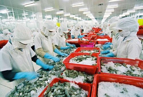 Chế biến tôm xuất khẩu tại Công ty Minh Phú. Ảnh: T.L