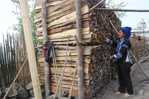 Bên nhà người Hà Nhì luôn có những đống củi to dự trữ cho mùa đông do phụ nữ lấy.