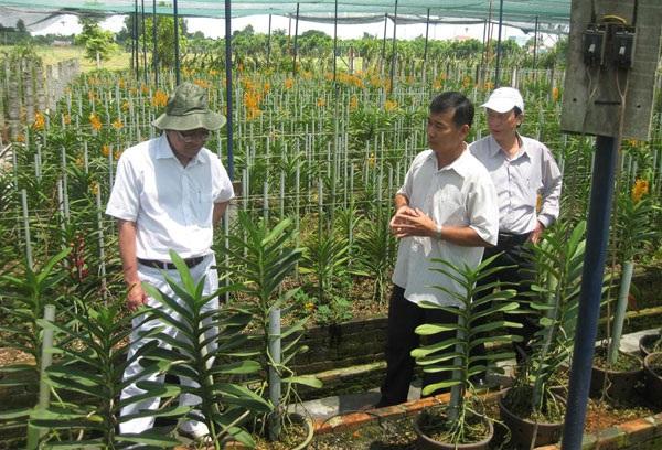 Mô hình trồng lan Mokara tại xã Tân Thông Hội (Củ Chi, TP.HCM). ảnh: T.T