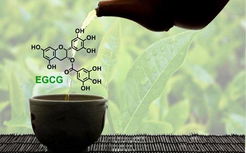 Phải đến sau này, các nhà khoa học Nhật Bản mới phát hiện công dụng của EGCG trong việc ngăn ngừa các bệnh ung thư, tim mạch, cao huyết áp, chống lão hóa, giảm căng thẳng, mệt mỏi.