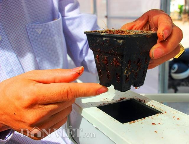 Mỗi ô sẽ được bố trí lượng xơ dừa thích hợp để giữ cho rau có thể đứng vững, hút nước và chất dinh dưỡng đầy đủ.