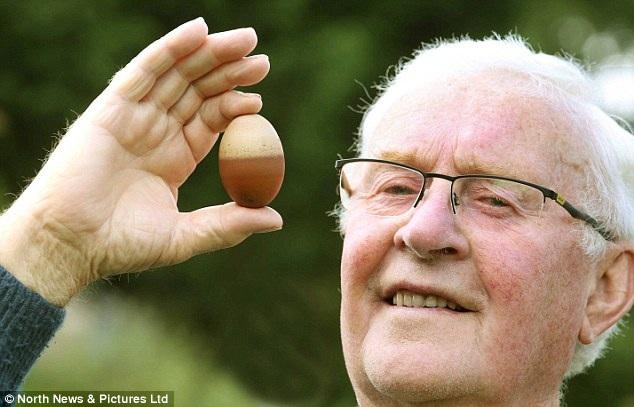 Quả trứng gà hai màu độc nhất vô nhị ở Anh - 2