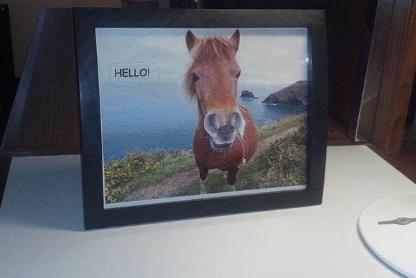 Một khách hàng viết: Tôi thường yêu cầu bức ảnh một chú ngựa nói lời chào Hello, và cuối cùng, cũng có nơi đáp ứng điều đó. (Nguồn: boredpanda.com)