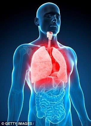 Các nhà nghiên cứu tại đại học UCLA hy vọng các mô có thể được sử dụng để nghiên cứu các bệnh phổi bao gồm cả xơ hóa phổi tự phát.