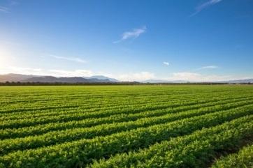 Đột phá trong nghiên cứu khả năng chịu mặn của cây trồng - 1