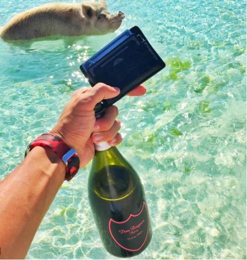 Chào một chú lợn đang bơi bằng một chai Dom Perignon đắt tiền