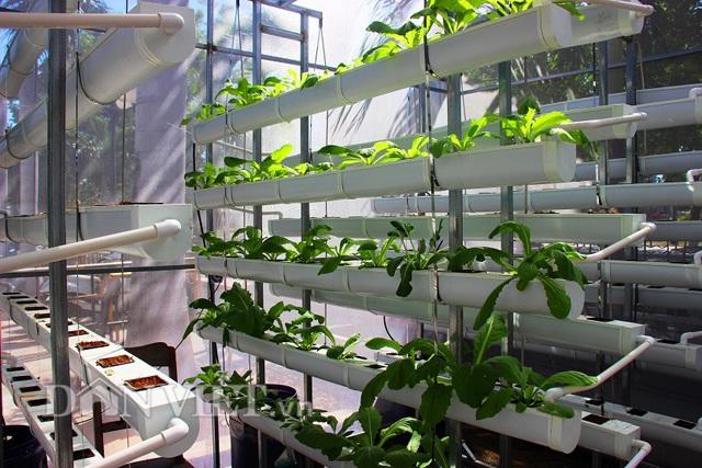 Chi phí của một giàn thủy canh hồi lưu chỉ có giá 8 triệu đồng với 100 ô trồng rau và có thể trồng nhiều loại rau khác nhau trên cùng giàn.