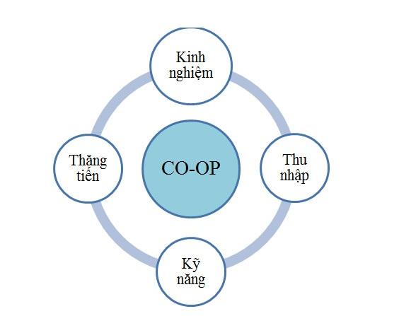 Chương trình thực tập hưởng lương Internship và Co-op Mỹ - 2