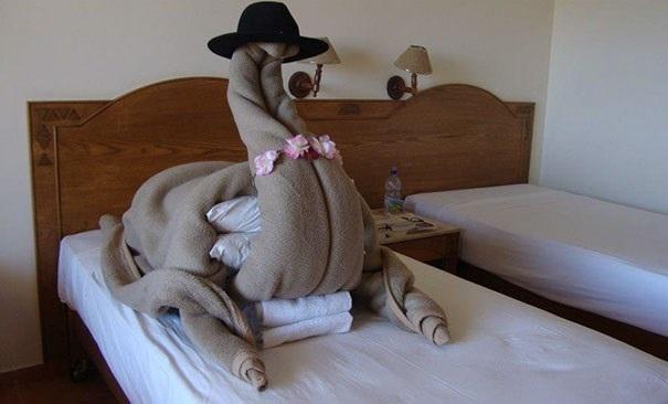 Tôi yêu cầu một chú lạc đà trong phòng. (Nguồn: boredpanda.com)