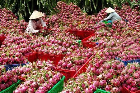 Sáu loại quả 100% thuần Việt, ăn thoải mái không dính độc - 3