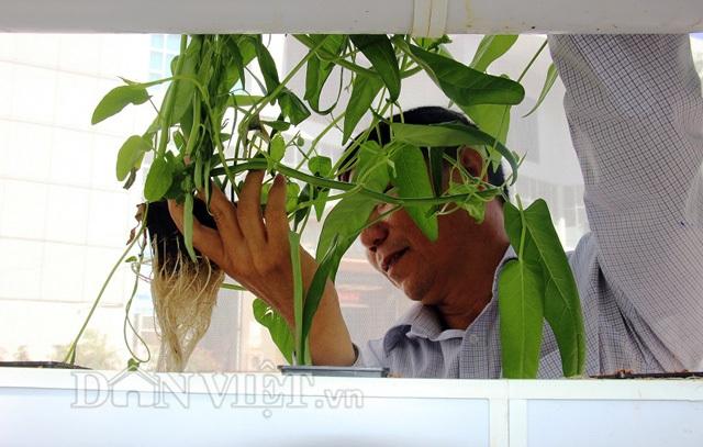 Máy bơm được điều khiển bằng hệ thống mạch điện tử sẽ tự động bơm tưới nên trong suốt quá trình từ khi trồng rau cho đến khi thu hoạch sẽ không phải tưới cho rau.
