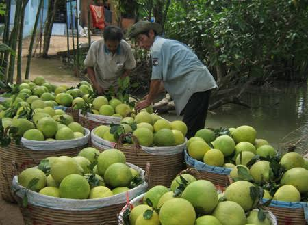 Sáu loại quả 100% thuần Việt, ăn thoải mái không dính độc - 4