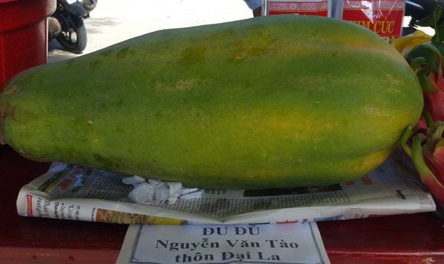 Bí quyết trồng đu đủ sai trĩu, nặng tới 7kg/quả - 4