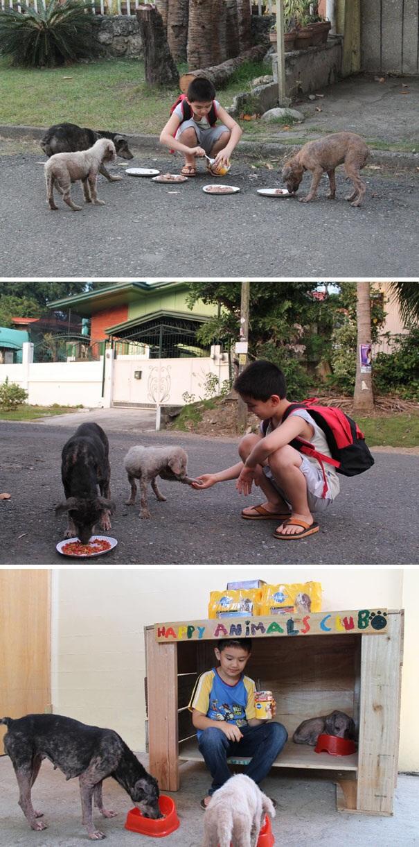 Một mái nhà dành cho những động vật vô chủ trong thành phố đã được tạo ra bởi một cậu bé chỉ mới 9 tuổi.