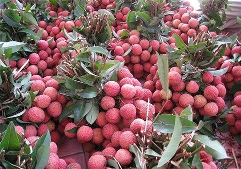 Sáu loại quả 100% thuần Việt, ăn thoải mái không dính độc - 5
