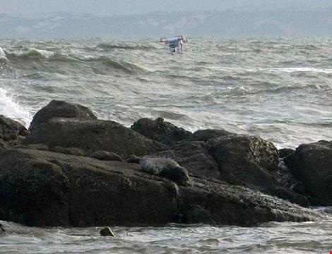 Hải cẩu xám bất ngờ xuất hiện ở biển Bình Thuận - 5