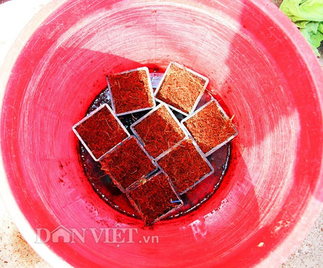 Ưu điểm của xơ dừa là thấm nước rất nhanh nên giúp bộ rễ của các loại rau có thể hấp thụ nước và chất dinh dưỡng một cách hiệu quả.