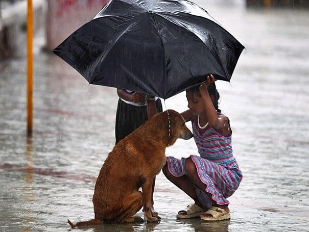Hình ảnh đầy xúc động về một cô bé che mưa cho chú chó hoang tại Mumbai, Ấn Độ.