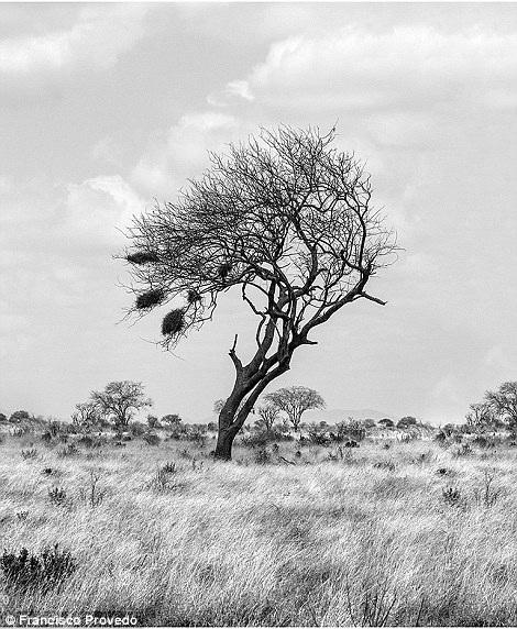 Rung động với những bức ảnh vùng nông thôn Kenya - 9