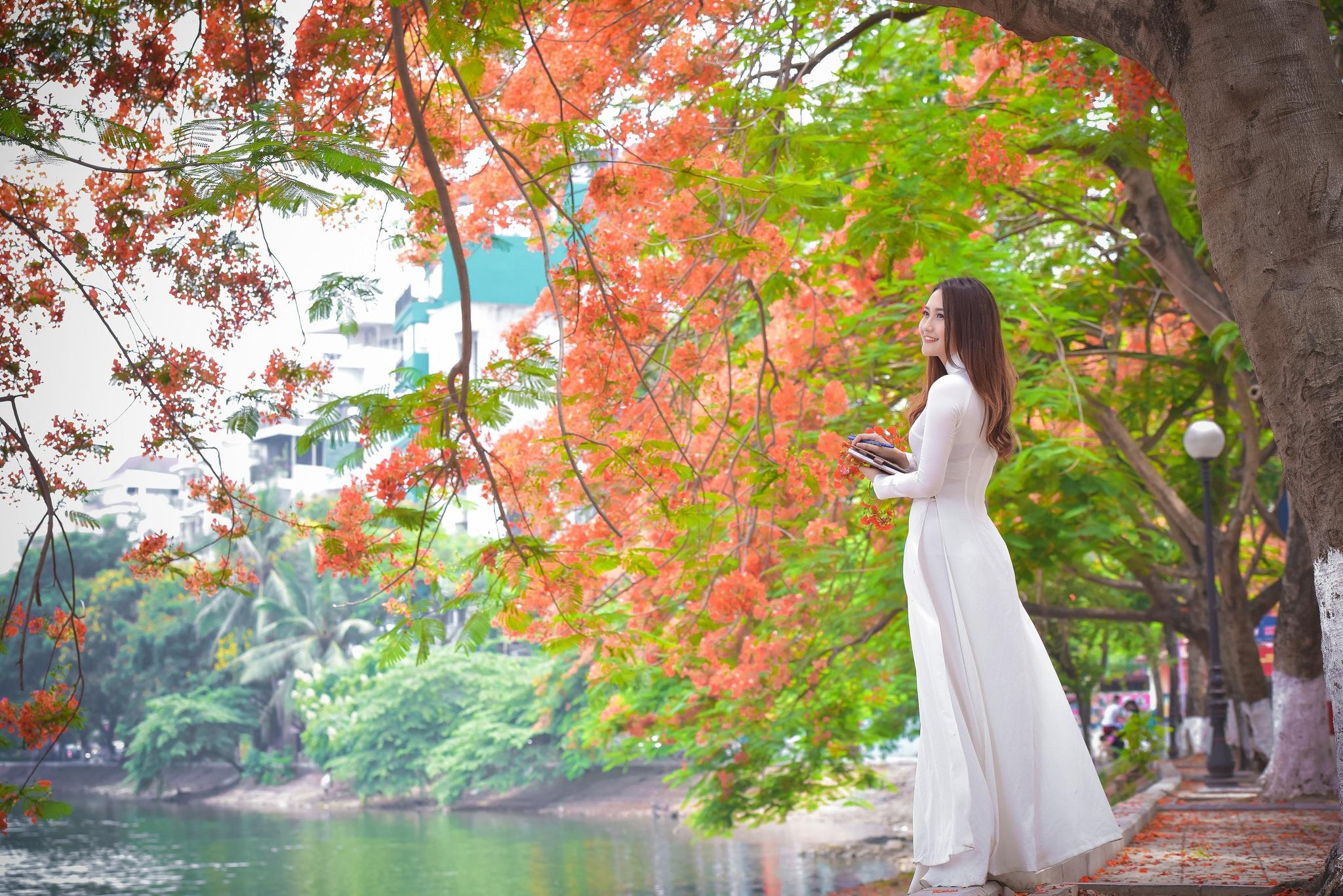 """Thiếu nữ Hà thành mơ màng bên hoa phượng """"rực cháy"""" - 17"""