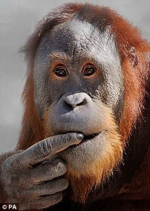 Rocky đang sống ở vườn thú Indianapolis , bang Indiana, Hoa Kỳ