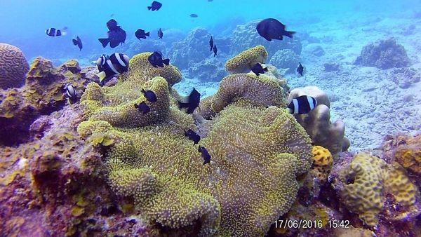 """Cuộc đua kỳ thú đến """"hòn đảo hoang sơ"""" Pulau Redang - 16"""
