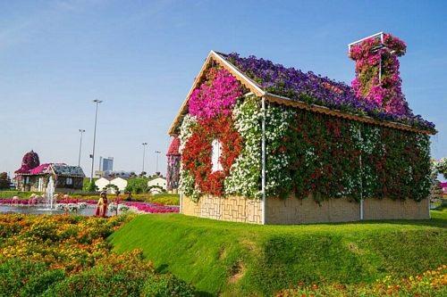 Khám phá Abu Dhabi: Thành phố ngàn hoa trên sa mạc - 2
