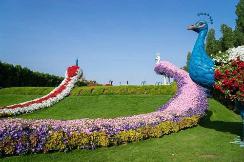 Khám phá Abu Dhabi: Thành phố ngàn hoa trên sa mạc - 4