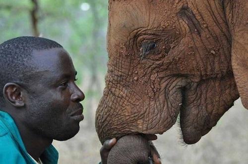 Bức ảnh đẹp thể hiện sự kết nối giữa con người và loài voi - 1