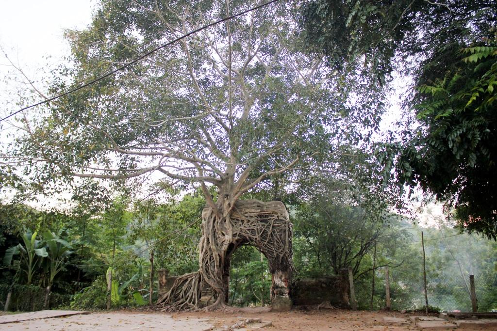Toàn cảnh vẻ đẹp ấn tượng về cây đa và cổng phủ Tương.