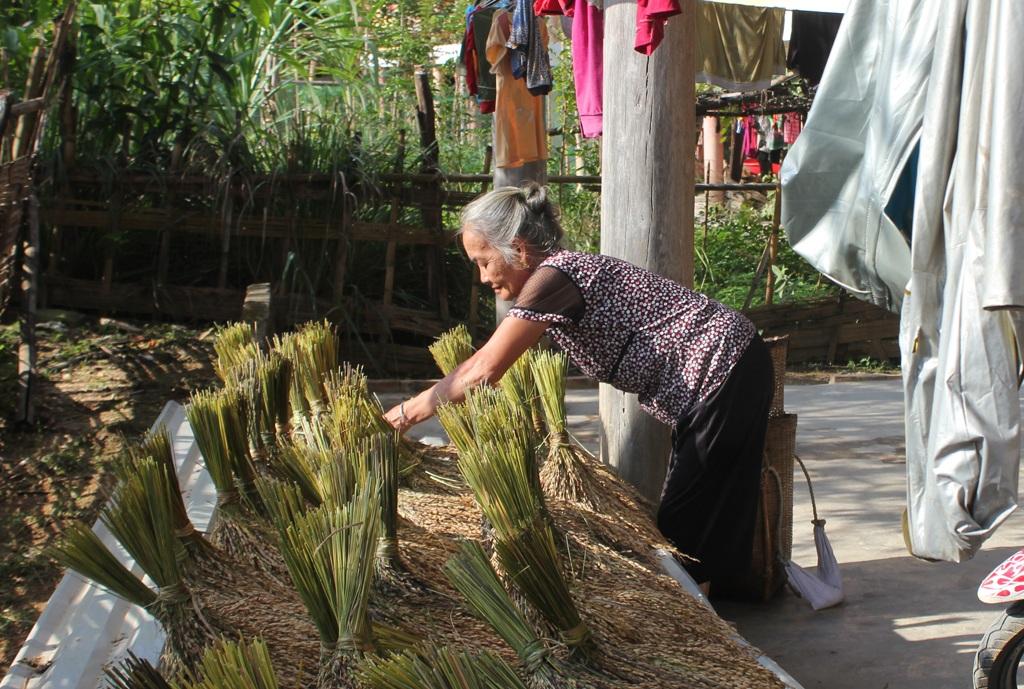 Bà Lô Thị Then phơi đám lúa rẫy mới thu hoạch. Thời gian hỗ trợ gạo đã hết, ruộng nước chưa có, bà Then lo cả gia đình sẽ phải chịu cảnh ăn đói.