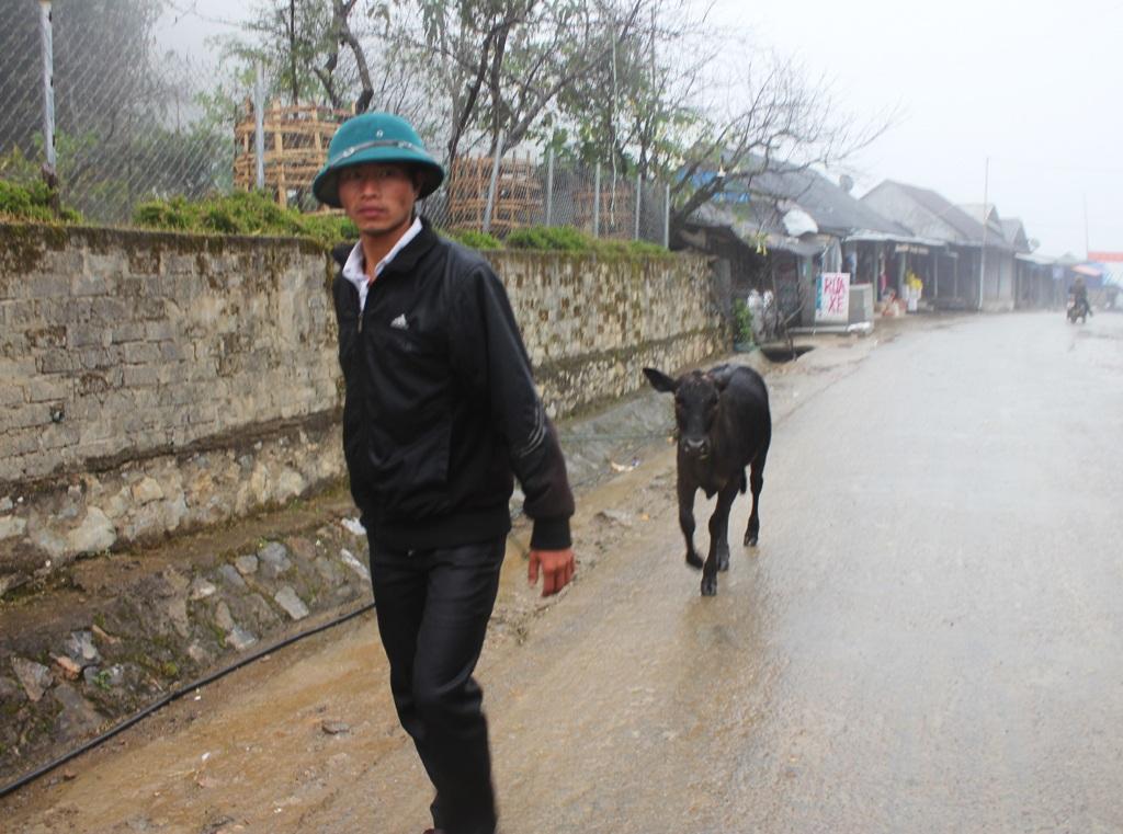 Người dân xã vùng cao Mường Lống (Kỳ Sơn) đưa gia súc đi tránh rét.